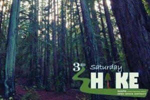 Redwoods of Napa County